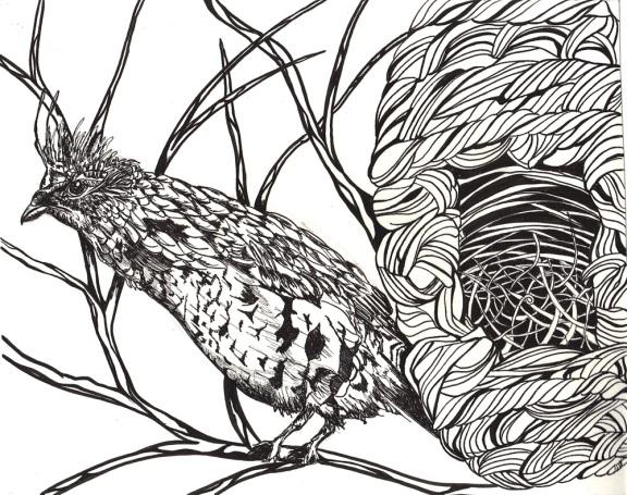 Day 60 6/28/12): Bird and Nest